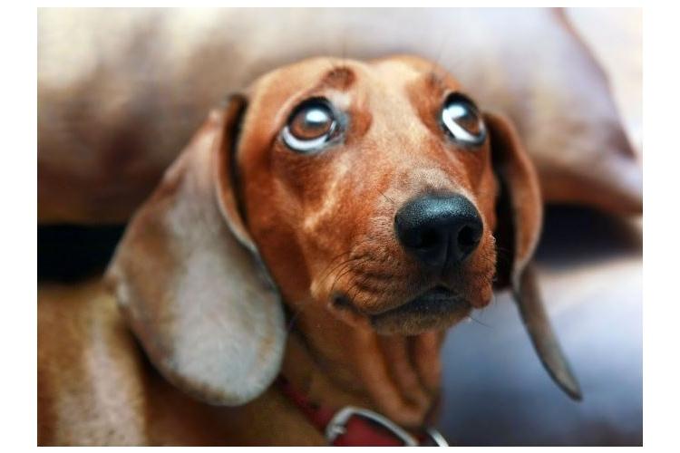 Собачья жизнь для хозяев?